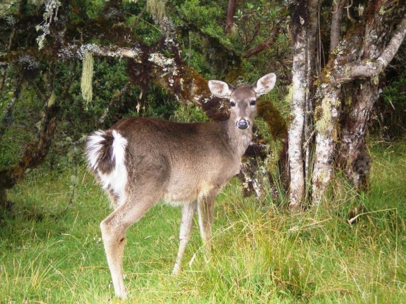 Fauna Parque Nacional Natural Chingaza - Cundinamarca. Foto David Medina
