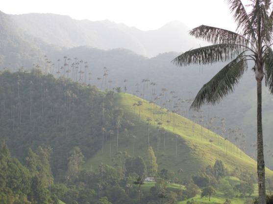 Valle de Cocora - Palma de Cera