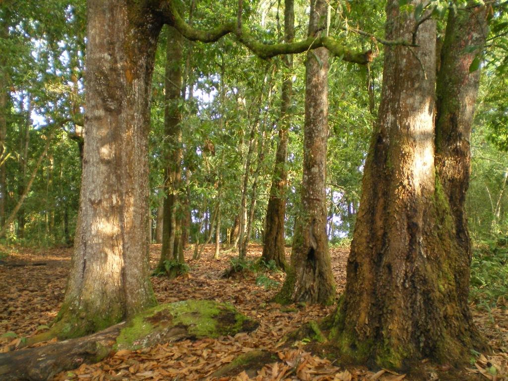 El cerro del quinin mas viaje mas vida for Caracteristicas de arboles frondosos