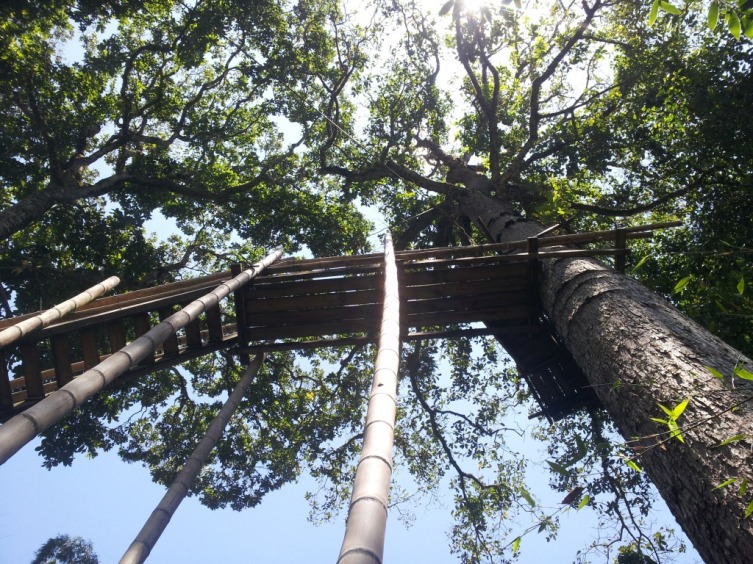Canopy Caracolies