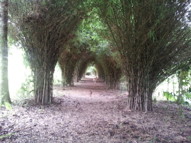 Tunel del Amor y la Naturaleza