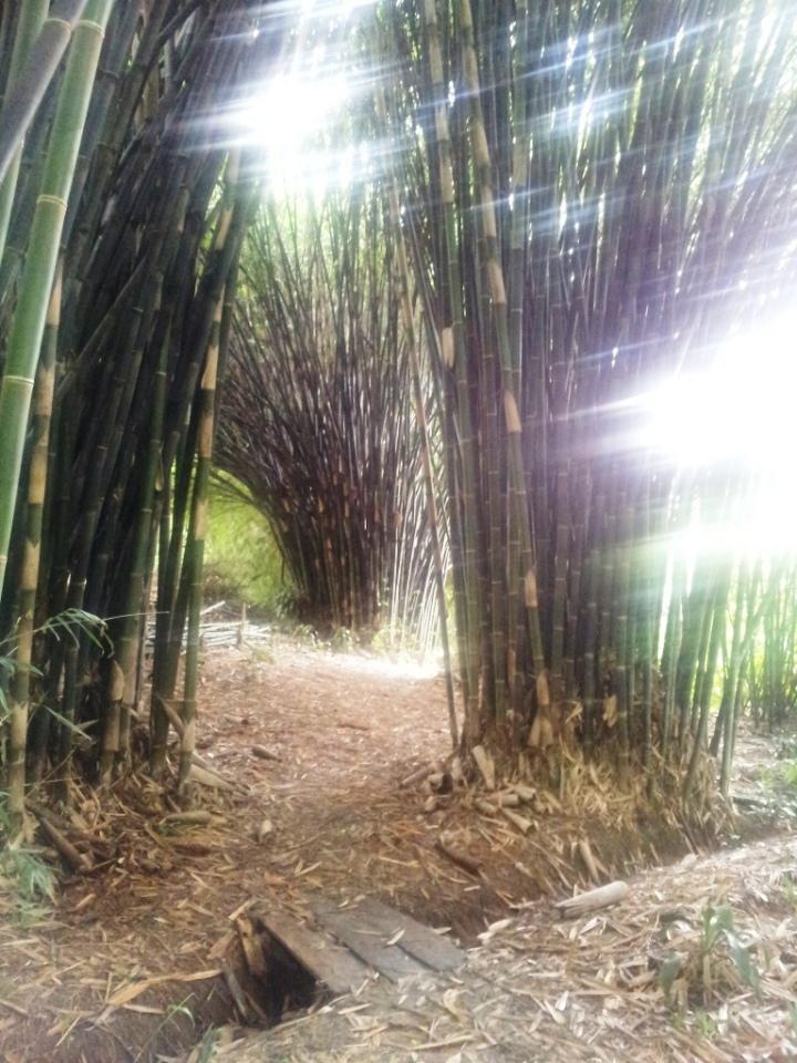El Paraiso del Bambú y la Guadua (42)