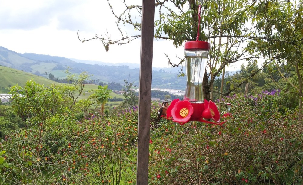 Senderos el recinto del pensamiento. Manizales - Caldas. Foto: David Medina