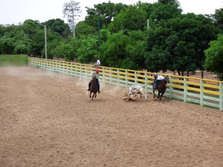 Coleo en Puerto Carreño - Vichada. Foto: David Medina