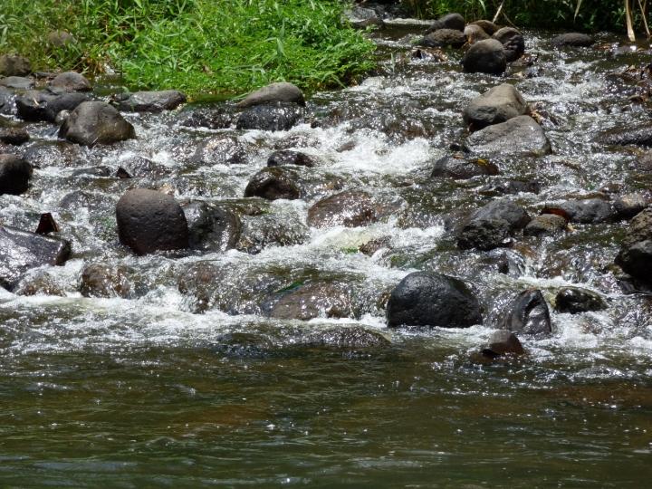Quebradas que alimentan de agua el río la vieja. Foto: David Medina