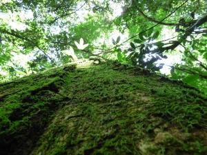 Naturaleza en Bahía Solano - Chocó. Foto: David Medina