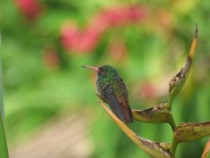 Aves en Bahía Solano - Chocó. Foto: David Medina
