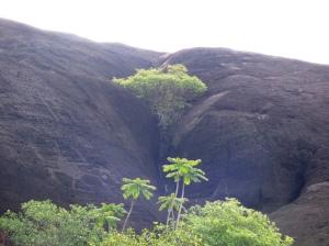 Petroglifos en Cazuarito - Vichada. Foto: David Medina