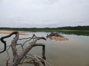 Río Bita - Finca La Pedregoza - Vichada. Foto: David Medina