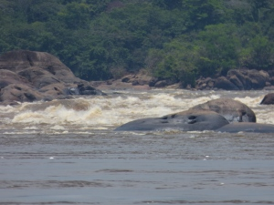 Raudal del Maipures - Río Orinoco - Parque Nacional Natural El Tuparro - Vichada. Foto: David Medina