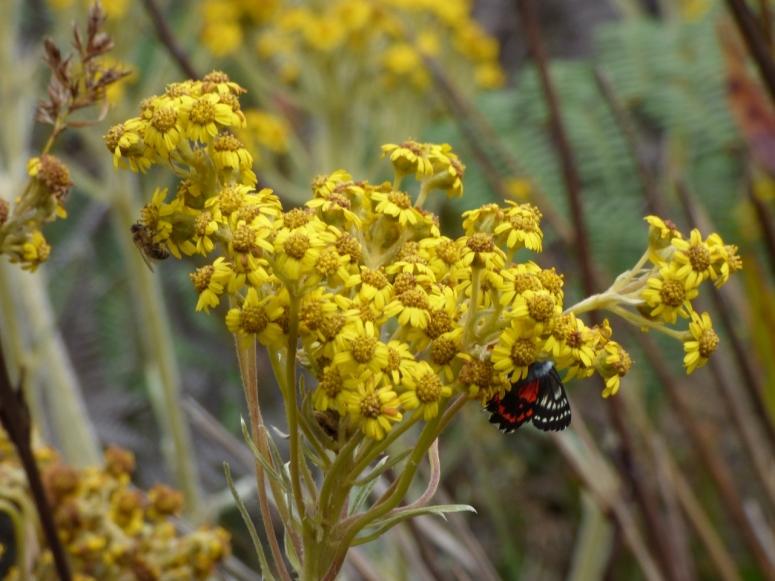 Flores y mariposas en la laguna de Guatavita
