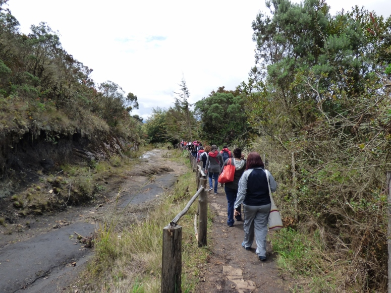 Cultivos de Papa en Guatavita - Cundinamarca - Colombia. Foto: David Medina