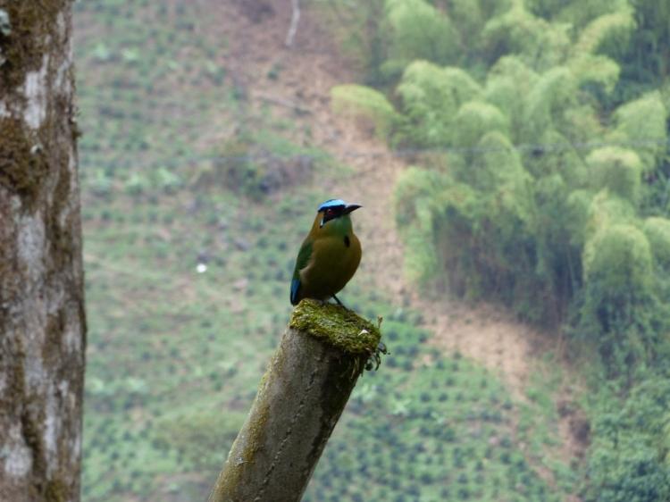 Barranquero en Pijao - Quindío. Foto: David Medina