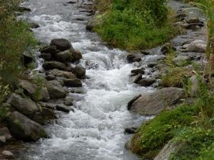 Naturaleza en Pijao - Quindío. Foto: David Medina