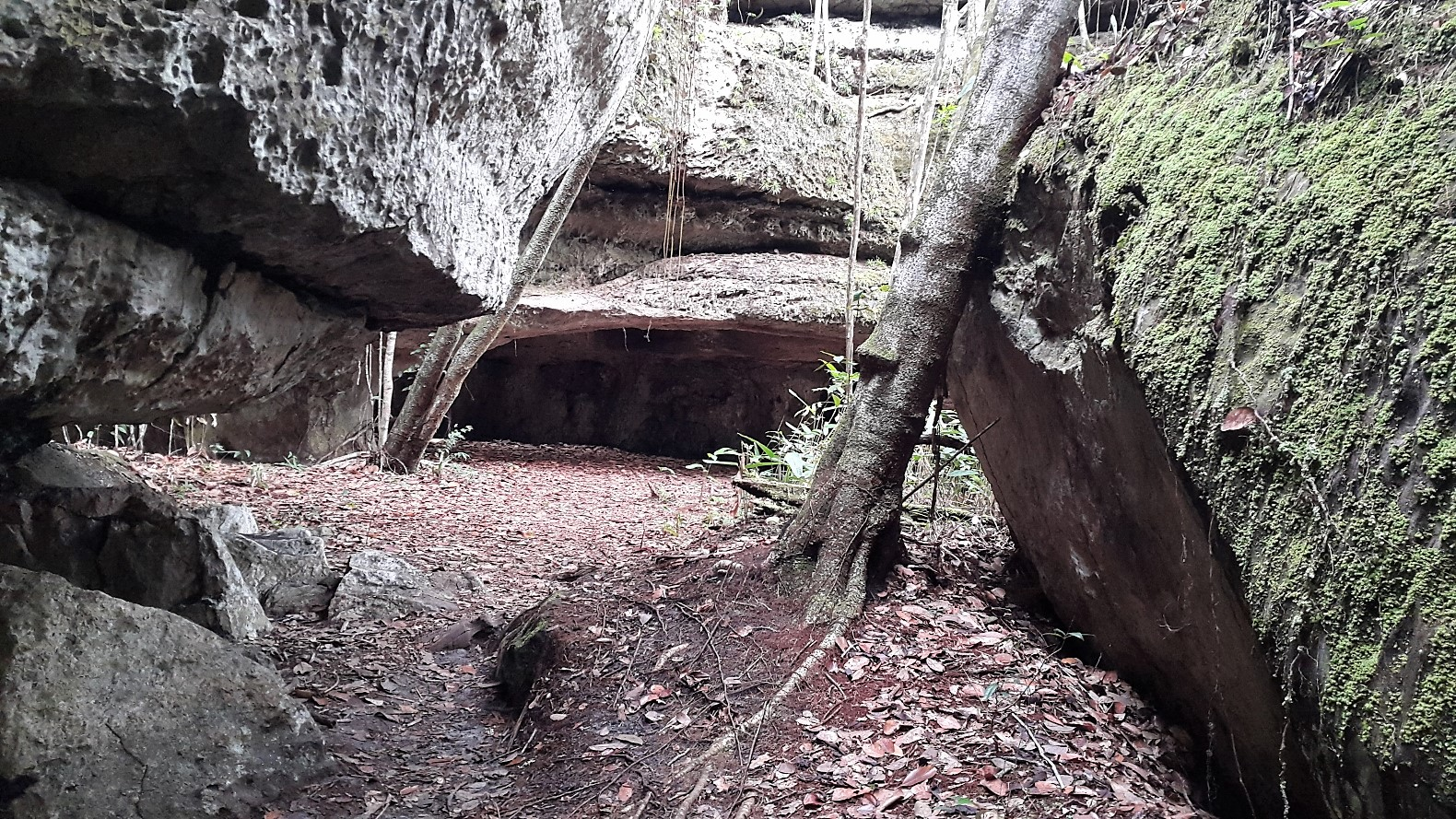 Los túneles - Guaviare. Foto: David Medina