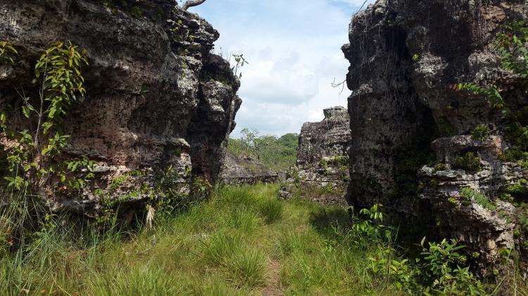 Ciudad de piedra - Guaviare. Foto: David Medina