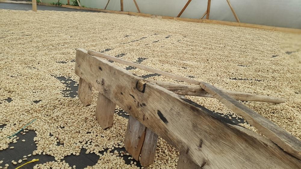Secado de Café en Calarcá, Quindío. Foto: David Medina